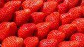 Lidl colabora estrechamente con una treintena de proveedores a los que compra fresas procedentes en su mayoría de la provincia de Huelva, cuna tradicional del cultivo de esta fruta en España.