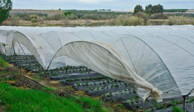 WWF dice que no se ha llevado a cabo la eliminación de las fincas en situación irregular fuera de suelos agrícolas regables.