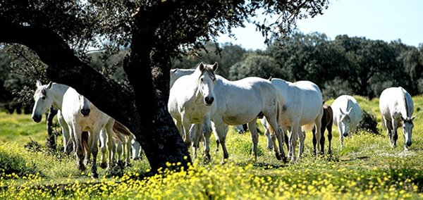 El importe a recibir por los ganaderos, en función del número de hembras reproductoras, oscila entre los 4.000 y los 7.000 euros.